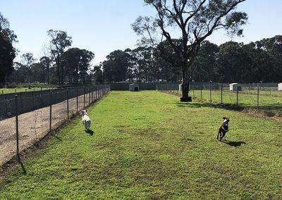 TCPR Dog Kennel - Yard